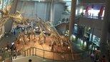 重庆自然博物馆获评国家一级博物馆