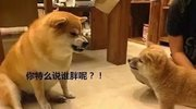 宠物界的韩红,都是治愈系?