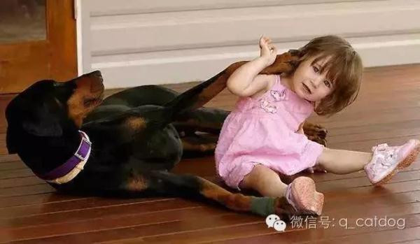 The dog bit the child to throw her out to see why.