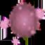 红色孢子.png