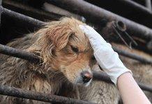动物保护与救助 我们在路上
