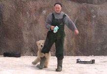 动物园小北极熊跟饲养员撒娇
