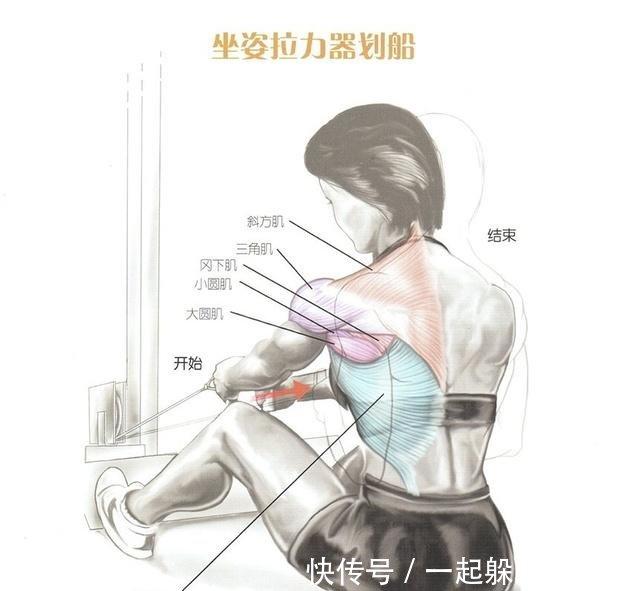 v背部背部锻炼方式视频群图解肌肉土豆父鬼教程图片