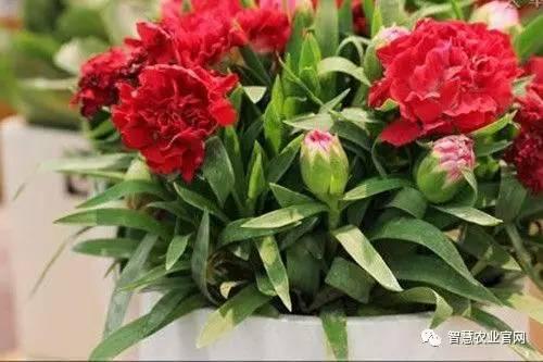 养花交流:花卉休眠期的养护管理技巧 - 平淡无奇 - 平淡无奇博客