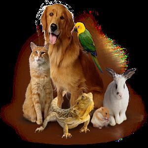 %免费免费动物的叫声包含超过一百声音.