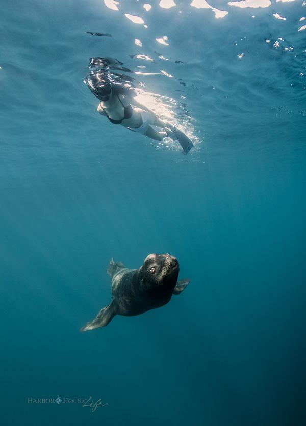 在世界海洋日,随7位自由潜水大咖走进奇幻海底