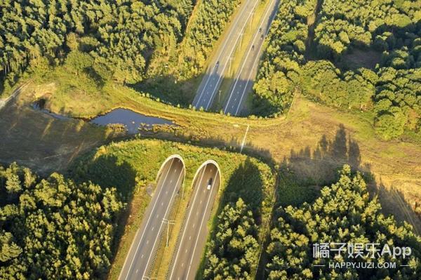 世界上有一种桥,专门为动物设计的