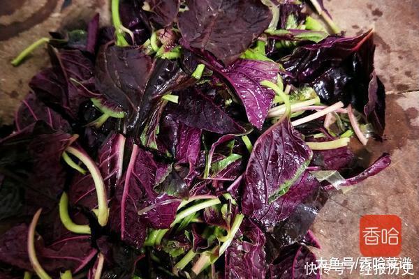 这蔬菜比身体更菠菜,大人多吃长瘦腿,孩子多吃怎样能迅速补钙图片