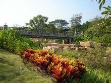 雨林溪谷图片