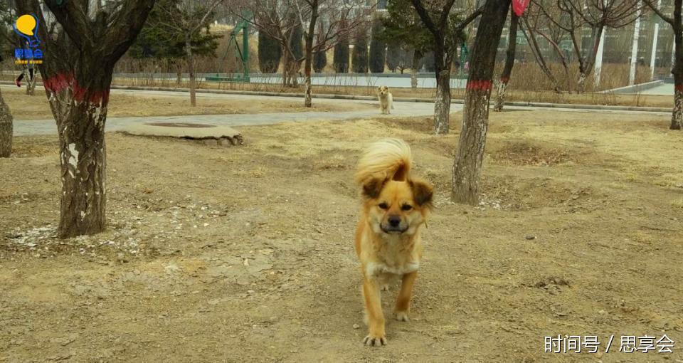 【转】北京时间     大学校园里的两只流浪狗,比那些被吃掉的狗狗更加幸运和幸福 - 妙康居士 - 妙康居士~晴樵雪读的博客