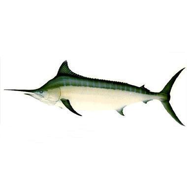 游泳速度最快的动物: 旗鱼可算是动物中的游泳冠军