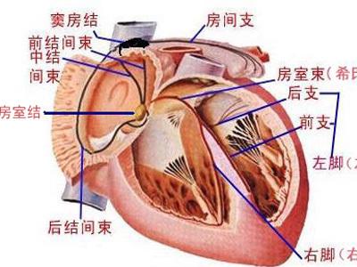 血管彩铅手绘图