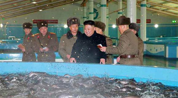 金正恩视察朝鲜鲇鱼养殖场
