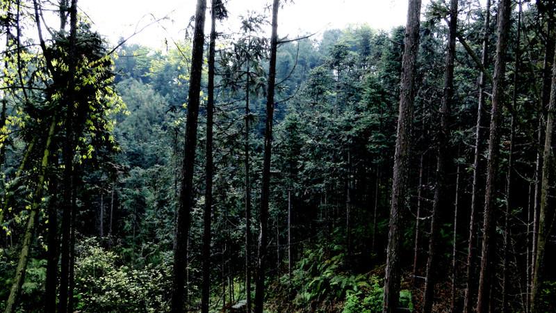 石城山风景区,于1992年经国家林业部批准列建的省级森林公园,位于宜