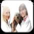 宠物保险: