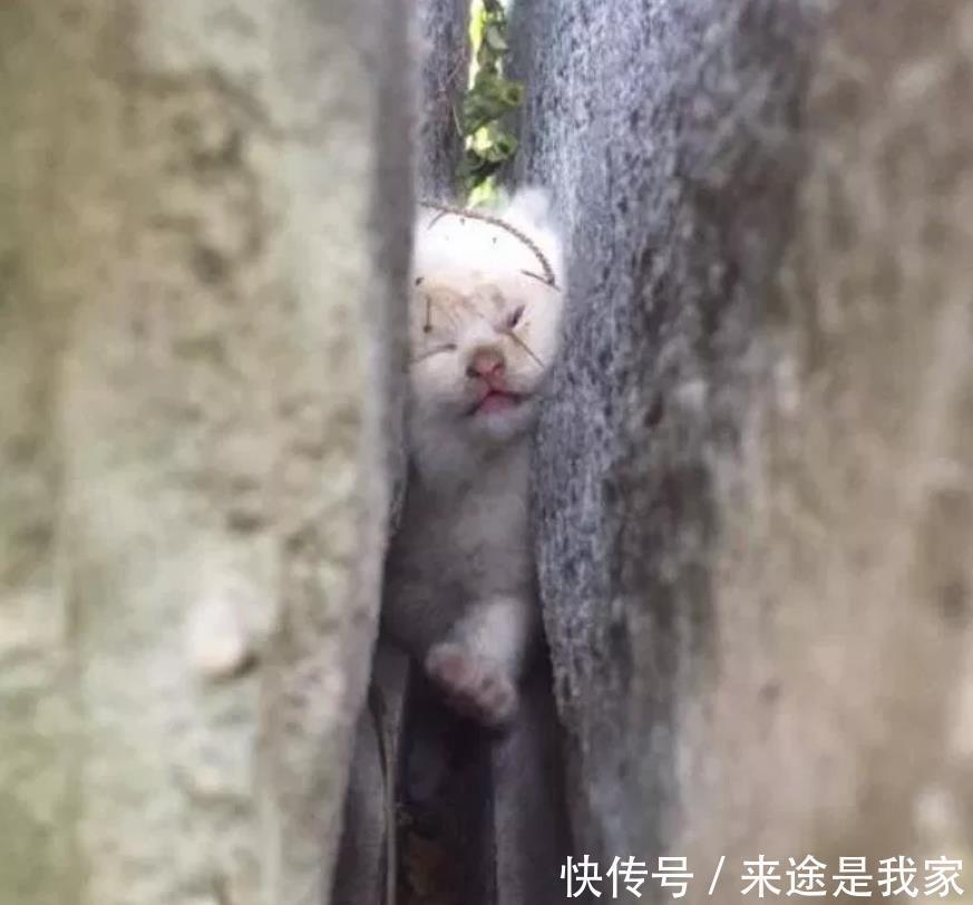 小猫被岩石缝卡住,叫喊2天后被男子发现,被救后因祸得福被收养