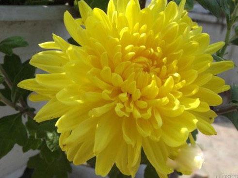 求花卉图片及名称大全?