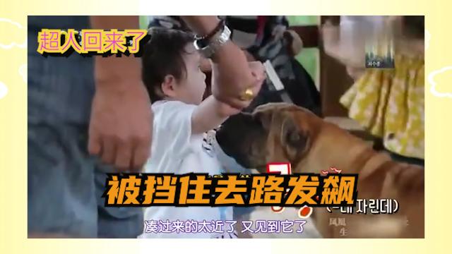 超人回来了:宝宝被狗狗挡住去路,顿时发飙.