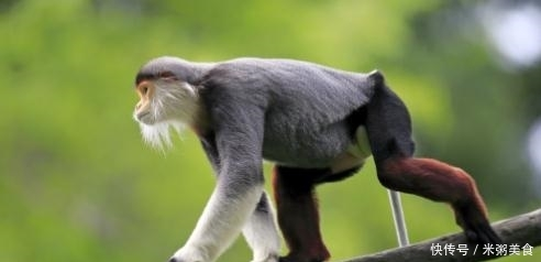 大金猴:六顺、七福、八路财、九久运、十全美!