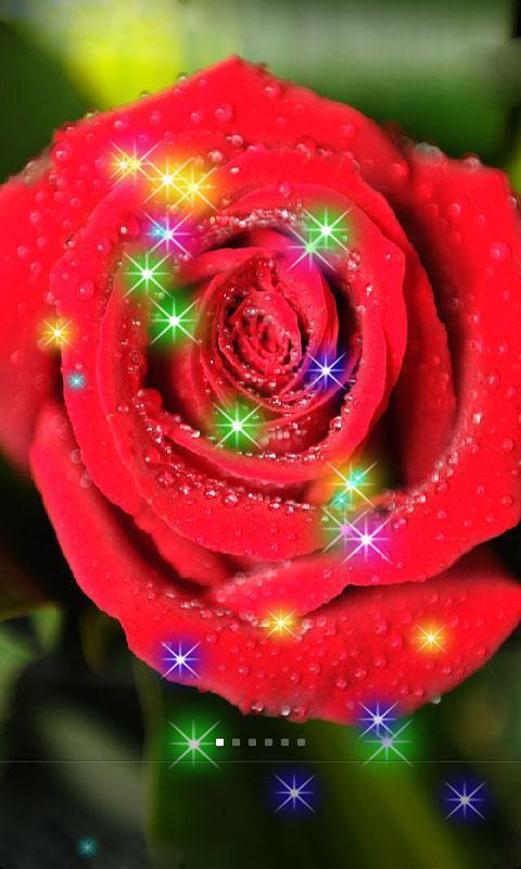 玫瑰花朵 图片 唯美 手机壁纸展示