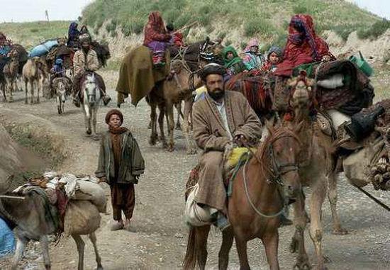 阿富汗gdp_阿富汗猎犬