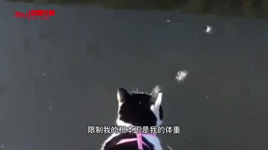 猫:犯了多大事儿啊 这是要斩首啊