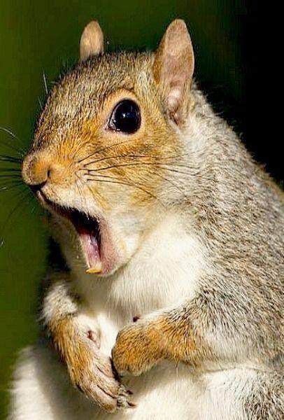 动物界的搞笑系列故事,又萌又可爱!一起来看看吧
