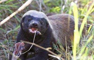 动物世界: 最爱吃蛇的7大动物, 我们都爱吃辣条