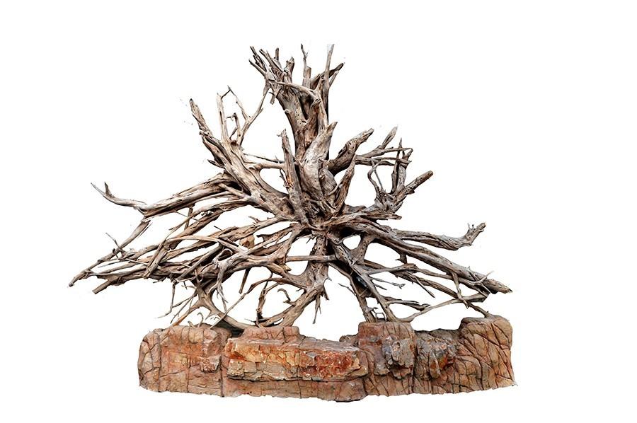 500年红松明子来自长白山的天趣艺术