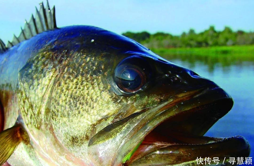 <b>现在这个季节钓鲈鱼,你需要知道点额外的技巧……(上)</b>
