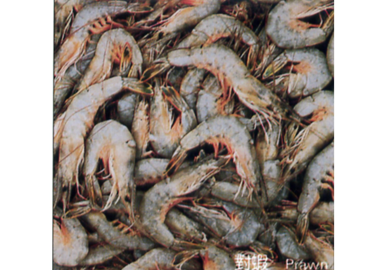 2005年黑岛镇共有260艘渔船从事海洋捕捞,总动力11800马力,其中80马力