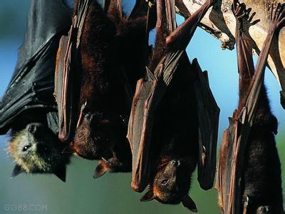 夜间动物园蝙蝠
