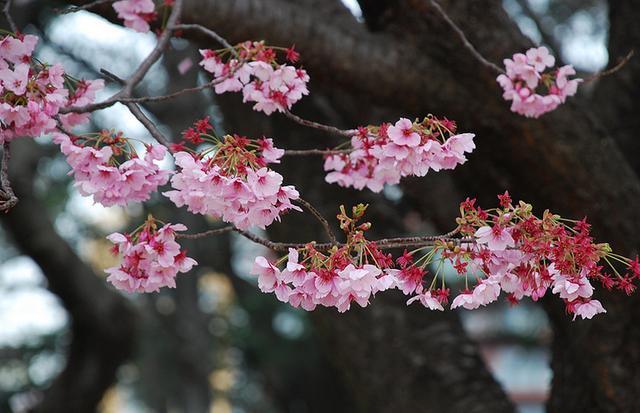 在动物园不可以领略梅花的高洁,坚忍,还可以郁金香,牡丹,桃花等上百