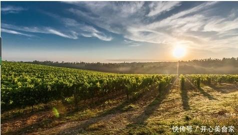 容易栽培的果树葡萄,关于葡萄的最佳种植攻略,小编带你来看看!