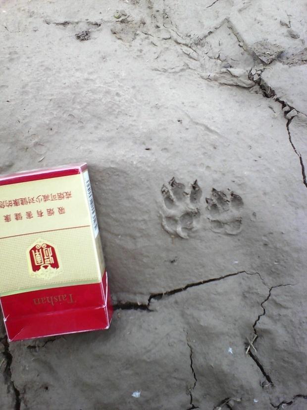 什么野生动物的脚印