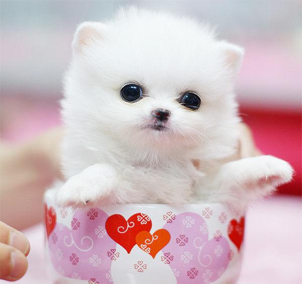 哪种宠物狗最可爱,我想买一只