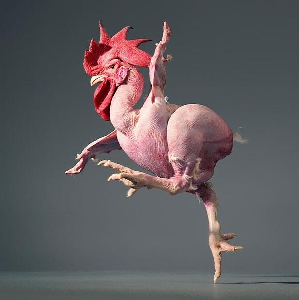 服了这个动物摄影师,你把那个裸奔的鸡怎么了!第5张!(2)