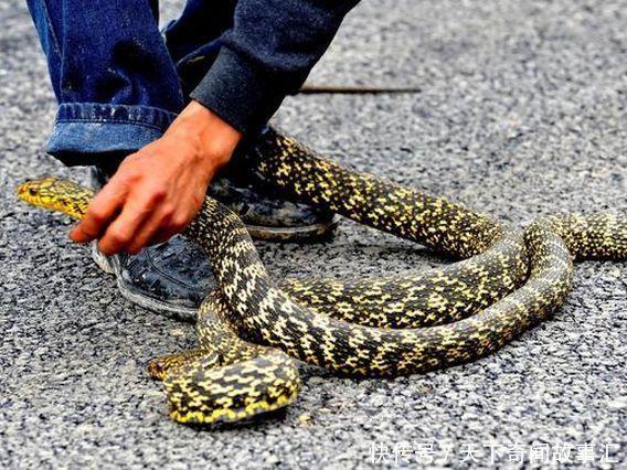 大蛇吃人事件_乡村老农爱吃蛇,打死坟墓大蛇,吃蛇肉变蛇人,原来是公