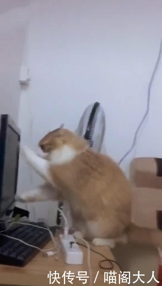 男子沉迷于电脑,长时间不陪猫玩耍,猫做出报复行为,猫:挠坏你