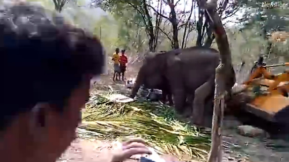 印度村民用拖拉机帮大象站起来 -  - 真光 的博客