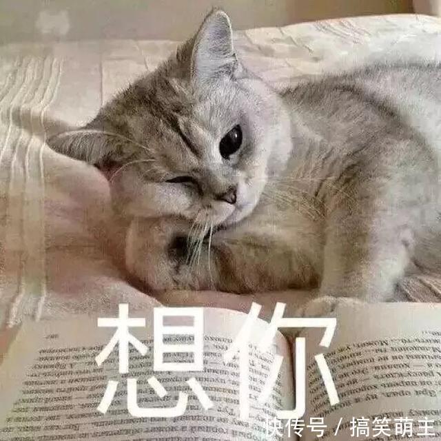 卖萌表情表情:你这个小可爱,电你喔猫咪包搞笑动漫下载大全图片