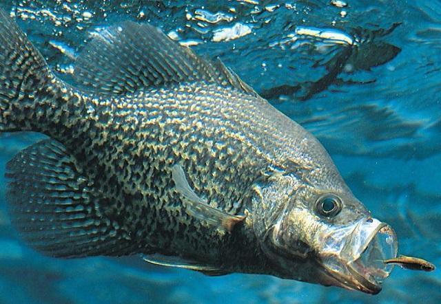 海水不能够直接食用,那么深海之中的鱼口渴了喝什么?