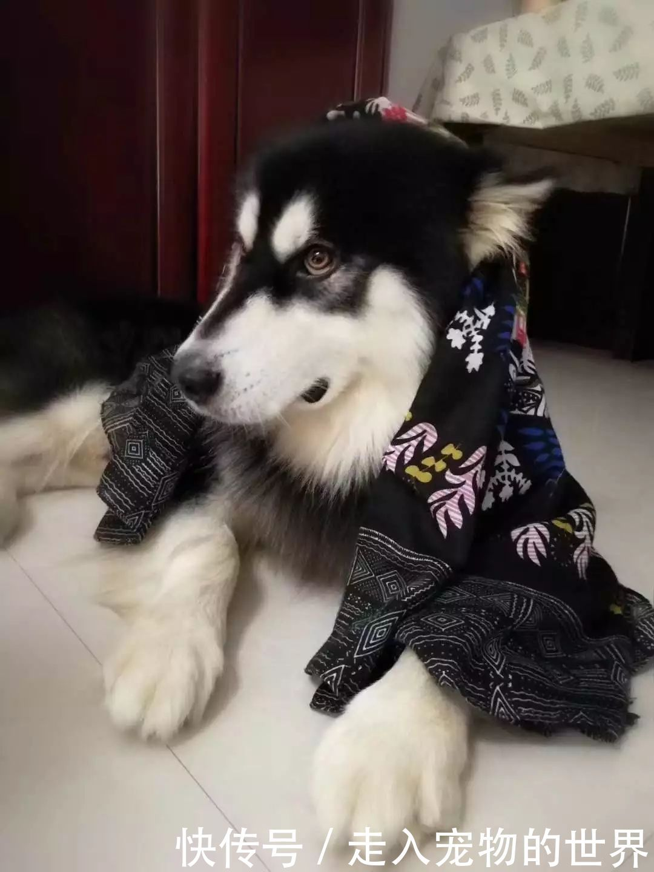 狗狗早晚都打伞拉粑粑却被无良铲屎官出门,狗偷拍的诗句女生图片