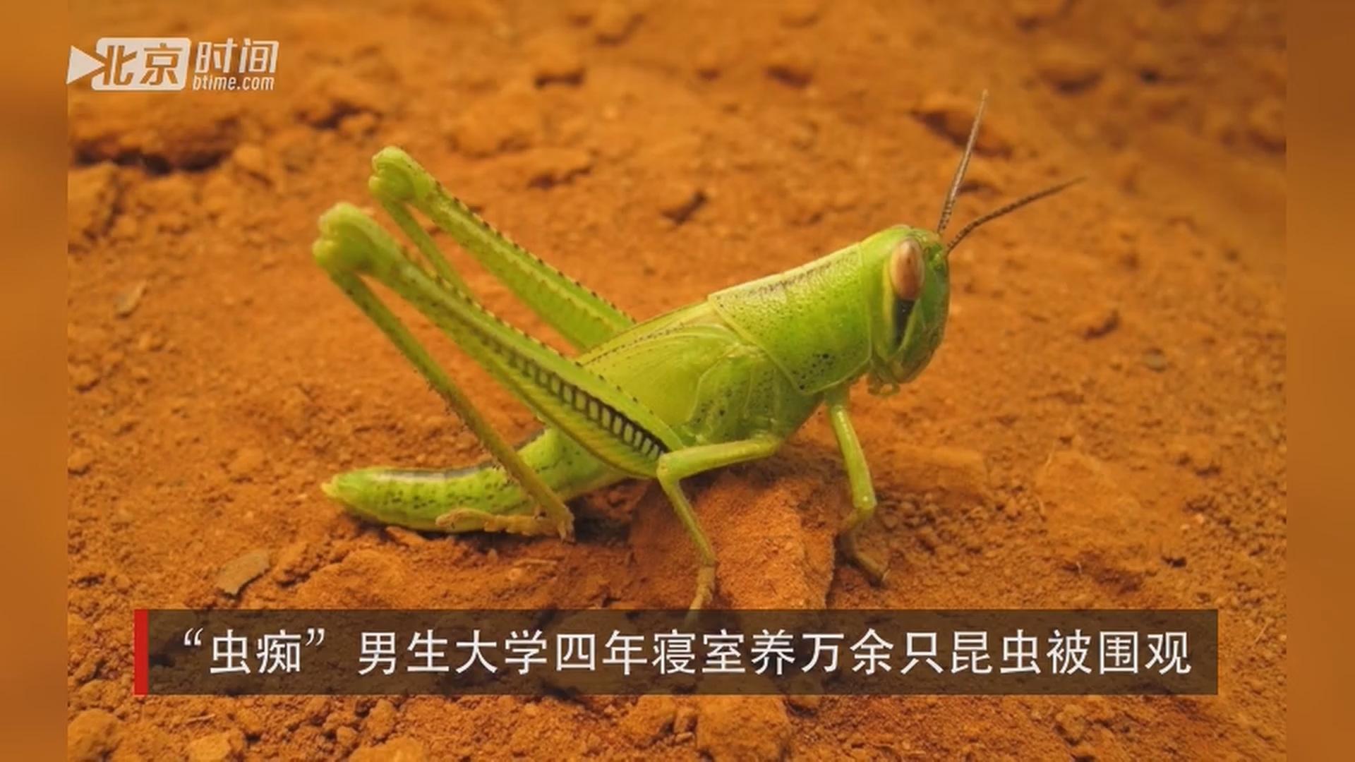 伤心不已的赵宇晨就利用自己的专业所长,将它们制作成了动物标本.