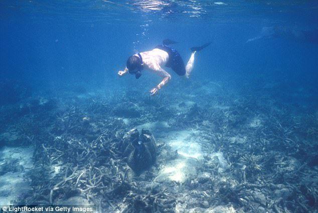 澳大利亚男子游进鳄鱼嘴里…… -  - 真光 的博客