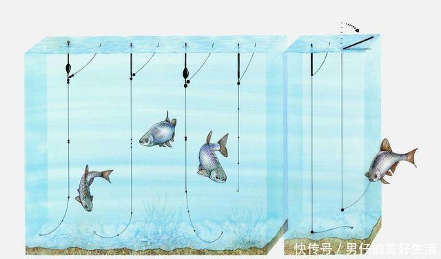 钓鱼技巧——高手怎样浮钓鲫鱼,告诉网友一调漂绝招