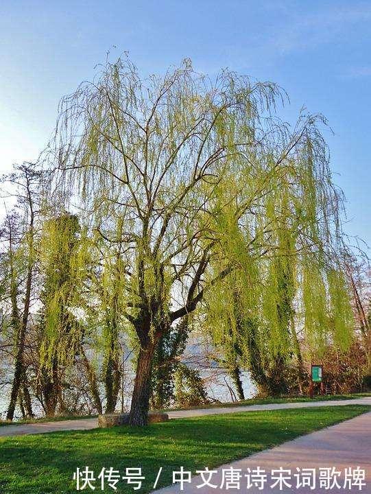 四首使用早春柳树的古诗词,感受春之生机描写椅如何冲凉情趣图片