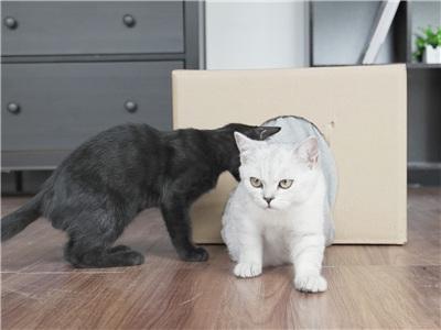 DIY猫咪穿梭箱!喵星人无法拒绝的爱