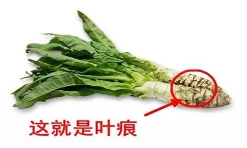 """春天""""千金菜"""":惊人的保健功效 - 一统江山 - 一统江山的博客"""