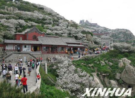 泰安-江苏扬州市泰安镇